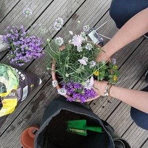 workshop fleurs de balcon